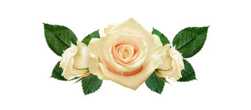 Rose flowers arrangement Stock Images