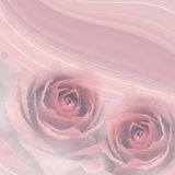Rose flowers background Stock Images