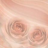 Rose flowers background Royalty Free Stock Photo