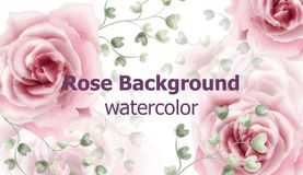 Rose flowers background watercolor Vector. Delicate vintage pastel pink color floral decors banners royalty free illustration