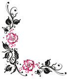 Rose, flowers, border. Black and pink roses, vector illustration Stock Image