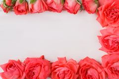 Rose flowers on borders.
