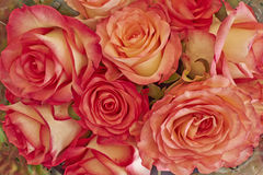 Rose flowers bouquet closeup Royalty Free Stock Photography