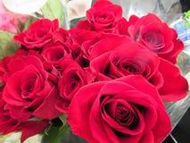 Rose Flowers Bouquet vermelha fresca & atrativa lindo fotos de stock royalty free