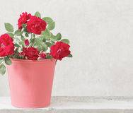 Rose flowers in bucket Royalty Free Stock Image