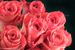 Rose flowers bunch Royalty Free Stock Image