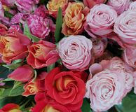 Rose flowers closeup, red roses. Valentine`s Day stock photos