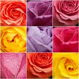 Rose flowers collage Royalty Free Stock Photo