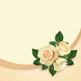 Rose flowers composition Royalty Free Stock Photo