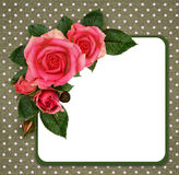 Rose flowers composition and frame Royalty Free Stock Photography