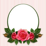 Rose flowers composition and oval frame Royalty Free Stock Photo