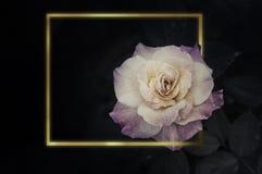 Rose Flowers en el diseño de tonos oscuros naturales Marco del oro fotografía de archivo libre de regalías
