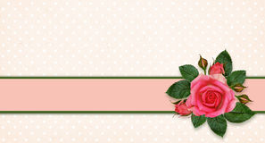Rose flowers and frame Stock Images