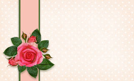 Rose flowers and frame Royalty Free Stock Photography