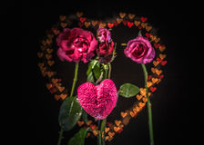 Rose flowers in the heart background. stock images