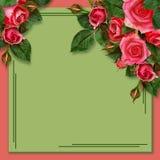 Rose flowers on holiday background stock photo