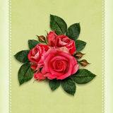 Rose flowers for holiday card Royalty Free Stock Photos