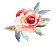Rose flowers illustration. Watercolor painting Stock Photos