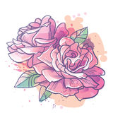 Rose flowers  illustration Stock Photography