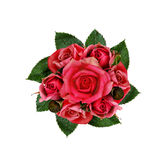 Rose flowers Royalty Free Stock Photography