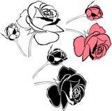 Rose flowers isolated. On white background stock illustration