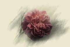 Rose Flowers no projeto de tons escuros naturais Imagens de Stock Royalty Free