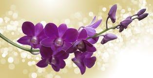 Rose Flowers no projeto de tons escuros naturais Imagem de Stock Royalty Free