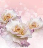 Rose Flowers no projeto de tons escuros naturais Imagens de Stock