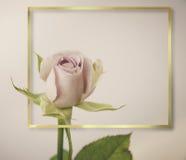 Rose Flowers no projeto de tons escuros naturais Frame do ouro Imagens de Stock