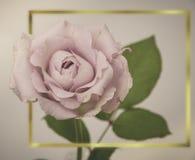 Rose Flowers no projeto de tons escuros naturais Frame do ouro Fotos de Stock