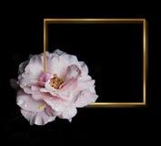 Rose Flowers no projeto de tons escuros naturais Frame do ouro Fotografia de Stock