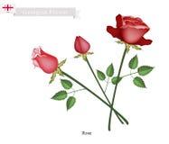 Rose Flowers, The Popular Flower of Georgia Stock Image