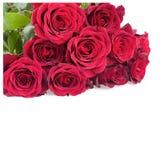 Rose Flowers rossa sopra bianco Immagine Stock