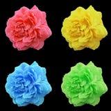 4 Rose Flowers su fondo nero Fotografia Stock Libera da Diritti