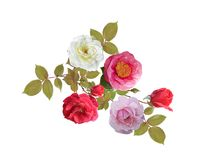 Rose flowers watercolor. Isolated on white background royalty free illustration