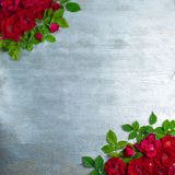 Rose flowers on wooden background royalty free stock photos