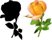 Rose foncée de jaune avec l'ombre d'isolement sur le blanc Photographie stock