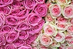 rose Fondo delle rose Fotografia Stock Libera da Diritti