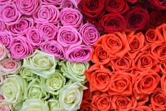 rose Fondo delle rose Immagine Stock