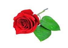 Rose in Form von Innerem Lizenzfreie Stockfotografie