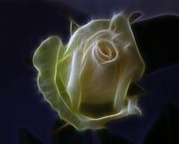 rose fractal obrazy stock