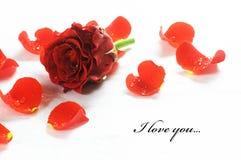 Rose frais rouge et pétales Image libre de droits