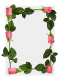 Rose frame 1. Sheet of paper with pink roses, love letter background border stock images