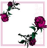 Rose Frame Stock Photography
