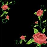 Rose frame. Rose creeper frame on black background Stock Photo