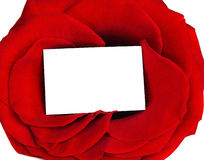 Rose frame. & blank greeting card isolated on white background, conceptual image of love & Valentine's day holiday Royalty Free Stock Photography