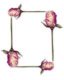 Rose frame Royalty Free Stock Image