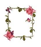 Rose Frame 5 Royalty Free Stock Photos