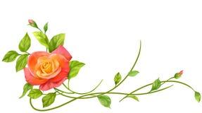 Rose frame. The rose frame for decoration Stock Image