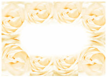 The rose frame, blooming flowers vintage background, pastel and soft card Stock Photos